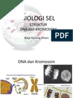Struktur Kromosom dan DNA.pdf