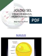 Struktur Nukleus.pdf