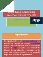 Reproducción Asexual en Bacterias, Plantas y Hongos