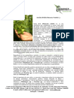 Sacha+Inchi.pdf