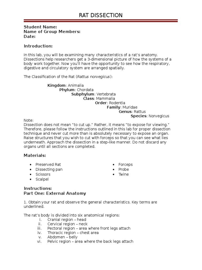 Rat Dissection Student Version | Small Intestine | Gastrointestinal ...
