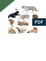 Animales Carnivoros, Herbivoros, Omnivoros