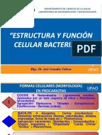 Tema 3. Estructura y Funcion Celular Bacteriana Dr. Gonzalez Cabeza