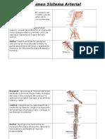 resumen sistema arterial