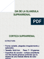 ENDOCRINO Suprarenal