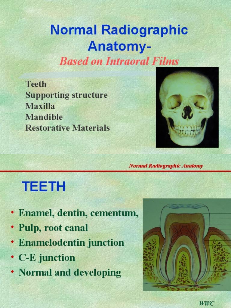 Normal Anatomy of Radiology | Human Tooth | Dental Anatomy