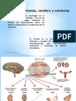 Fundamentos Biologicos de La Conducta