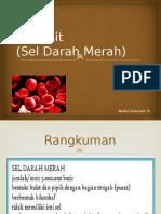 eritrositseldarahmerah-131124002140-phpapp01