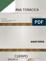 Columna Torácica