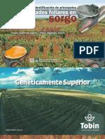 Inta Manual Para La Identificacion de Principales Enfermedades Foliares en Sorgo