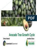 AVO - Avocado Tree Growth Cycle