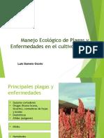 Manejo Ecologico Plagas Quinua Vf