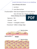 Ex 6a Epithelial Tissues
