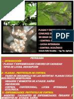Librosagronomicos.blogspot.com-Curso Plagas y Enfermedades Citricos