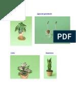 Plantas Sin Flor y Con Flor 2017
