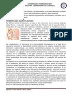 sistema de reparacion de tejido.pdf