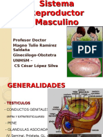 Sistema Reproductor Masculino OBST 2016