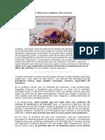 Los Diversos Caminos Del Escritor - Ana Claudia
