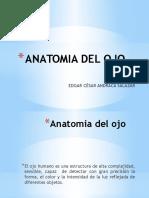 Anatomia Del Ojo II