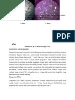 Analisa Petrografi - Batupasir Tufaan