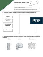 pruebadecienciasnaturales 2° A Los huesos