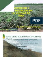 Cultivo Piña SBA