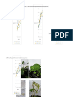 grafik hasil praktikum nutrisi pada Tanaman Cabai (Capsicum frustescens L.).docx