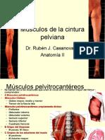 43.- Músculos de La Cintura Pelviana