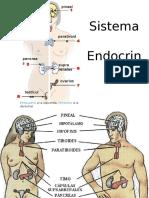 sistema-endocrino-1222628111104637-8