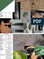 Γενική Φυτοπαθολογία εργαστήρ1ιο