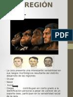 Antropología de La Región Facial111