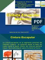 Cintura Escapular Anatomia