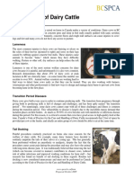 Bcspca Factsheet Dairy Cattle