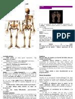 Sistema Osteo