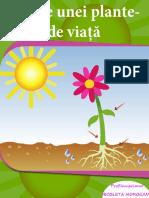 0 Partile Unei Plante