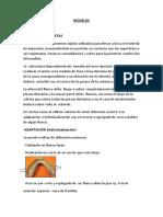 modelos e im 2017 (1).pdf