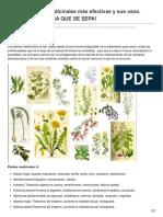 Las 230 Plantas Medicinales Mas Efectivas y Sus Usos