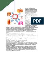 Homeostasis.doc