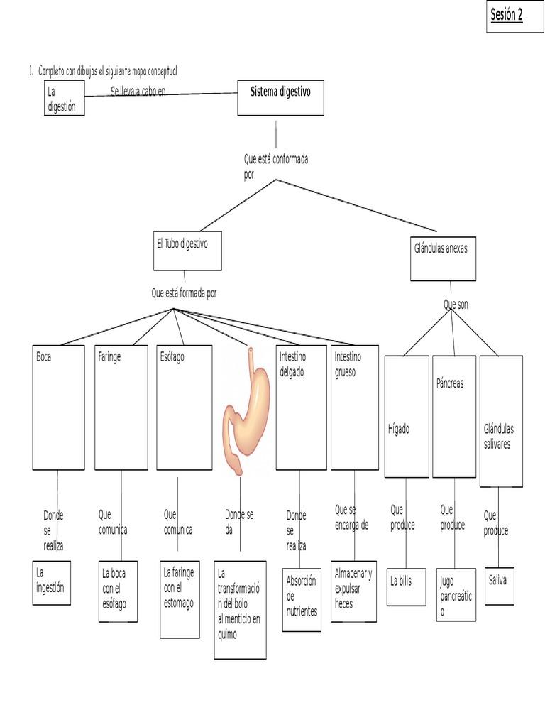 Mapa Conceptual Sistema Digestivo 5to