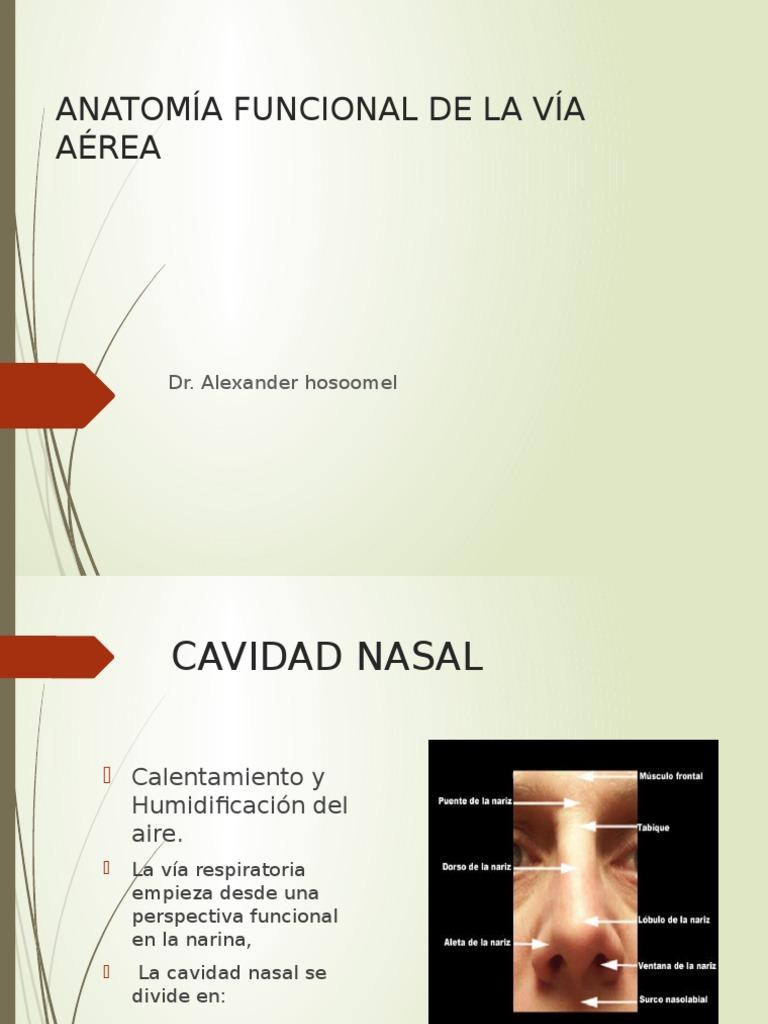 anatomia.pptx