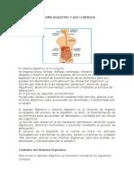 Sistema Digestivo y Sus Cuidados