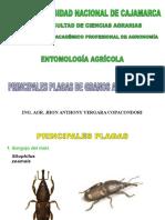 PLAGAS DE PRODUCTOS ALMACENADOS-1.ppt