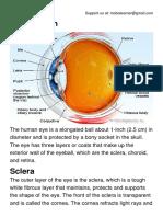 Anatomy of the Eye.pdf