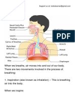 The Breathing System.pdf