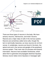 Types of Neurons.pdf