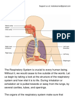 The Respiratory System.pdf