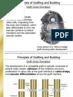 Grafting Factors