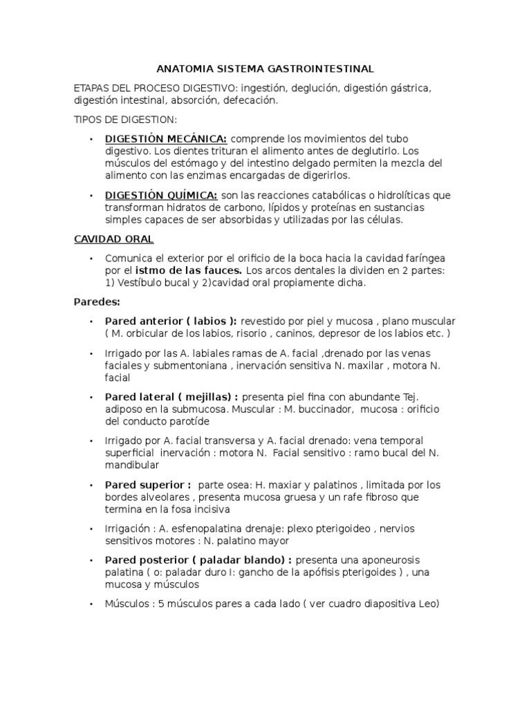 Anatomia Sistema Gastrointestinal