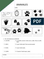 worksheet animals.pdf