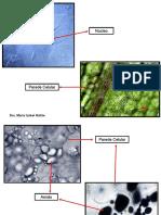Componentes Quimicos Da Celula